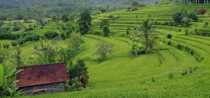Sidemen Bali, where time stood still