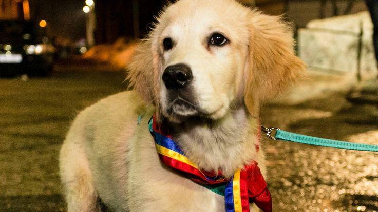 Romania's tale of puppy politics