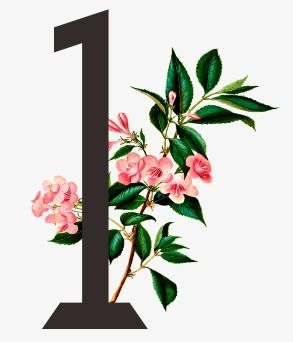 1,flowers,number 1,number,1 clipart | DECORATIVE FLORAL ...