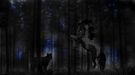 *Stay away from me!* - two colors, blue, dark, trees, woods, evening, forest, fantasy, hq, wolf, in, the, night, black, horse, wild