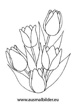 Ausmalbild Tulpenstrauß Ausmalen Blumen ausmalbilder