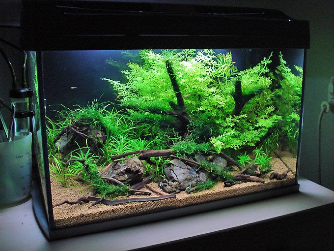 An easy layout for every 60cm standard aquarium set
