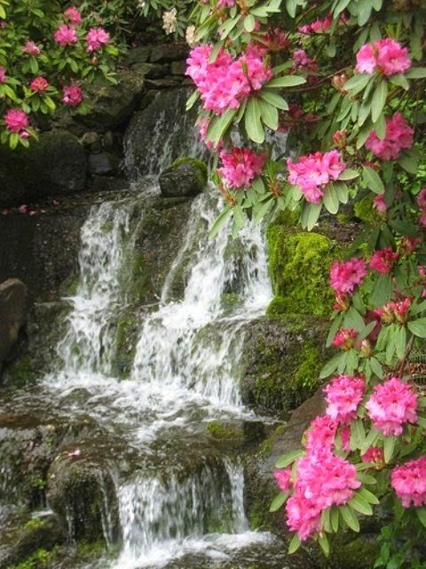 Waterfalls and Rhododendrons ... an often seen combination during Spring in the mountains of western North Carolina.