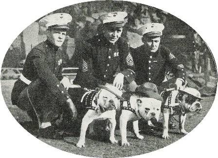 football to celebrate armistice 1927 | Marine Corps mascots that took part in the celebration of Armistice ...