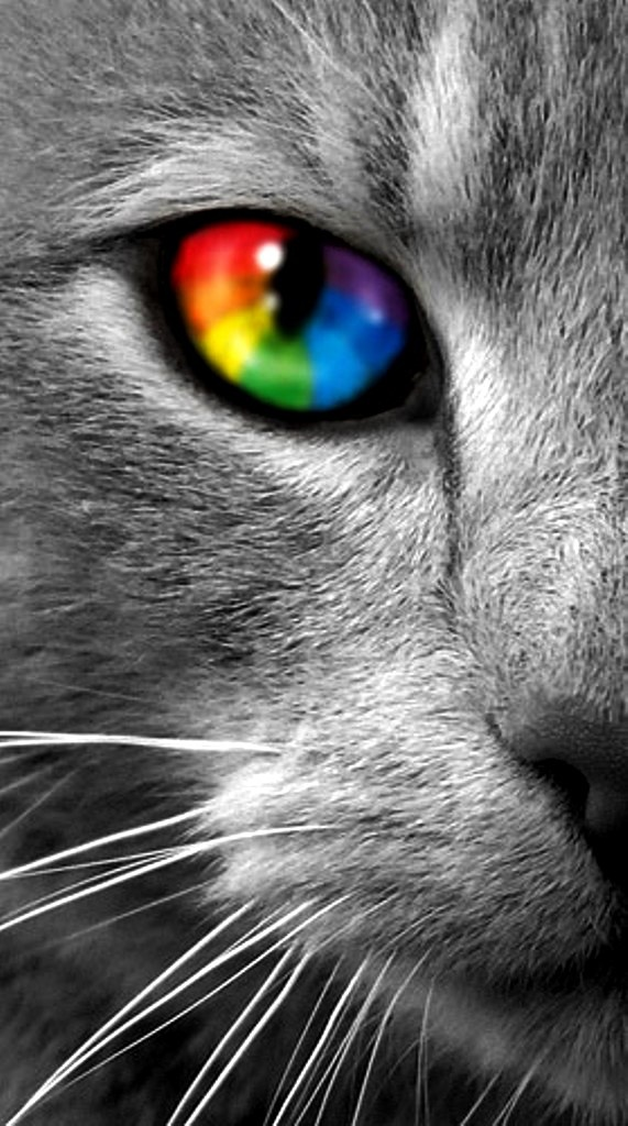 Rainbow colors ❖de l'arc-en-ciel❖❶Toni Kami Colorful kaleidoscope cat's eye color splash