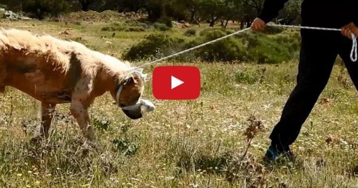Découvert errant dans la campagne grecque il y a peu, ce chien malade avait perdu tout espoir. Mais ça, c'était avant qu'une association de protection des animaux locale ne vole à son secours…