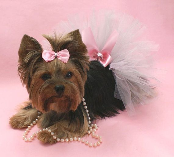 Wedding day outfit? Pink & Silver Sparkle Princess Dog Tutu and Matching Hair Bow. $14.95, via Etsy.