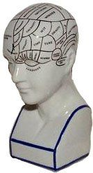 Phrenology Head small Phrenology is the science which studies the relationships between a person's character and the morphology of the skull. It is a very ancient object of study. The first philosopher to locate mental faculties in the head was in fact Aristoteles.