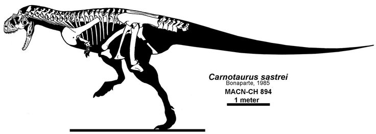 96 best images about dinosauricon c   carnotaurinae