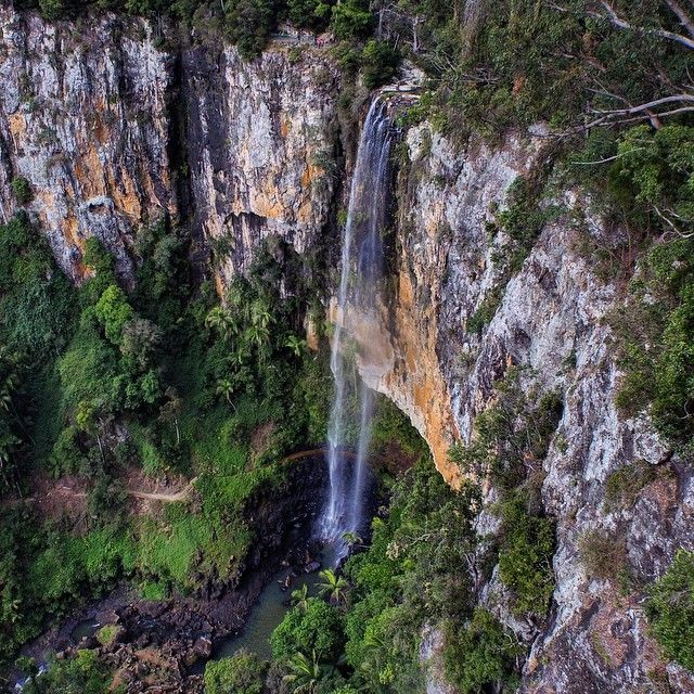 Purling Brook Falls in Springbrook National Park in the Gold Coast hinterland #thisisqueensland by @thesaltylens