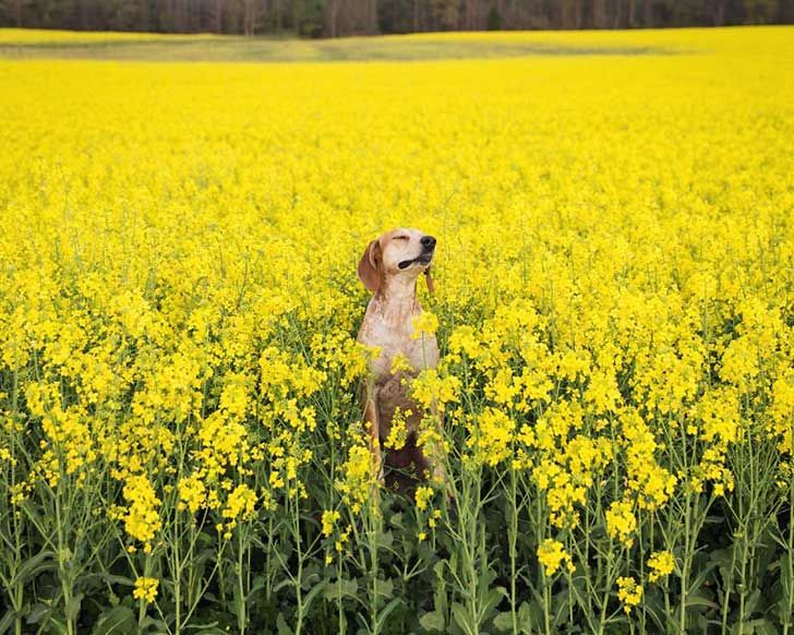 perro-maddie-viajes-moto-theron-humphrey-6