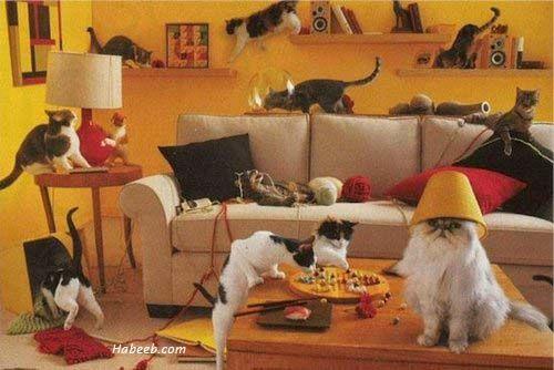 cat party debauchery.