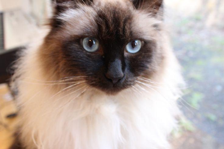 Serious Binny is serious #serious #cute #cat #kitten
