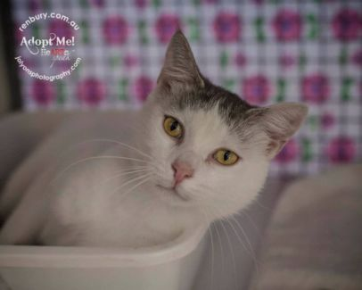 renbury.com.au pls share #Sydney area to adopt cats kittens dogs from animal shelter #Australia