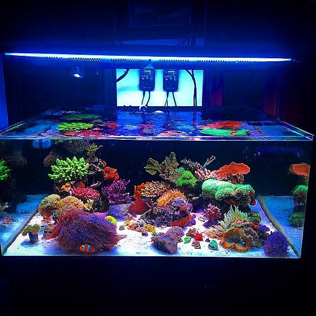 798 best images about reef tank aquarium r cifal on for Cube saltwater fish tank