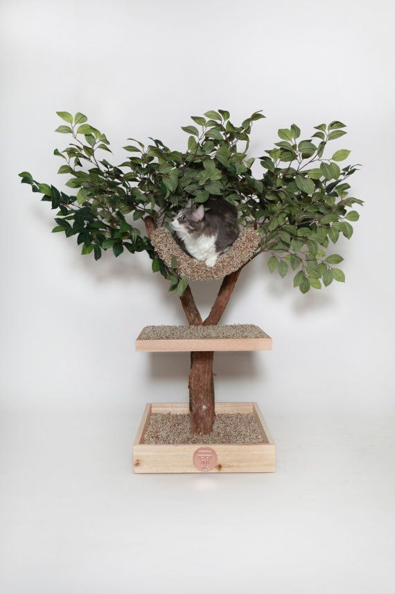 Seedling Cat Tree - Cats feeling at home in the outdoors, but really INdoors....#cathome