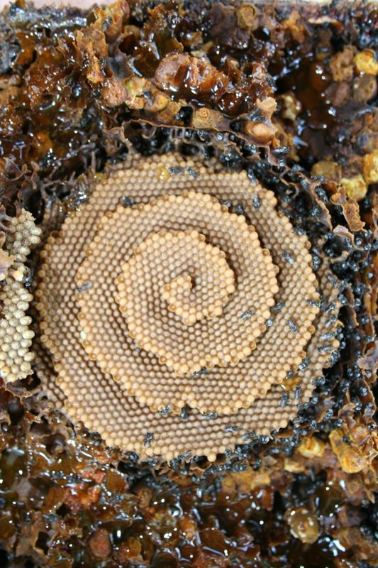 Yesterday's edition of Krulwich Wonders (which is a science-y NPR blog) addressed the question of why honeybees build hexagonal patterns in the wax combs of their hives.  For example, why don…