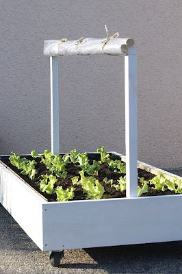 movable garden. cover rolls up. absolutely perfect for using your garden as your primary source of cooking: fruits, veggies, herbs, spices...