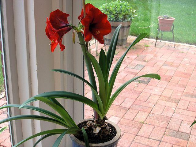 1000 images about flower arrangement ideas on pinterest for Amaryllis vente