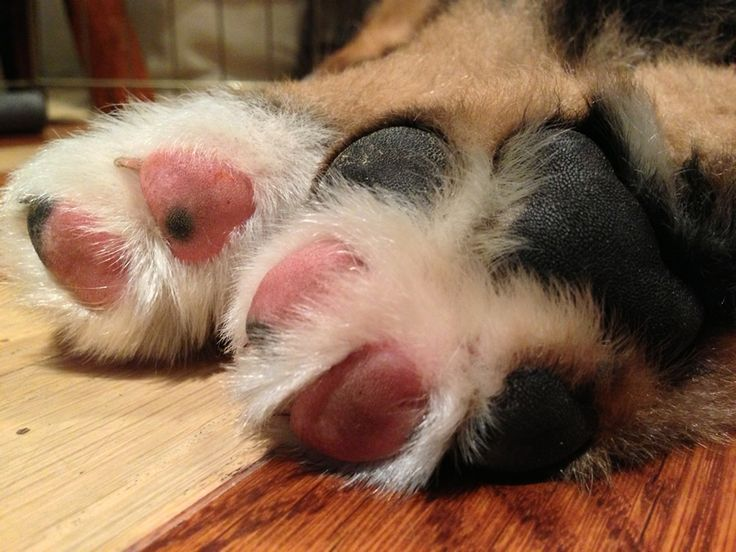 """What could be cuter than puppy feet? If you have an adorable pet, send us his/her picture! We'll feature your buddy on the Animal Connections """"Pet of the Week"""" page: Just jump onto our Facebook page, and send us the details about your buddy!  www.facebook.com/... #pets"""