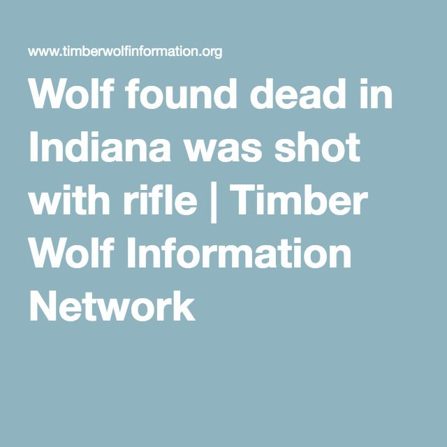 Wolf found dead in Indiana was shot with rifle | Timber Wolf Information Network