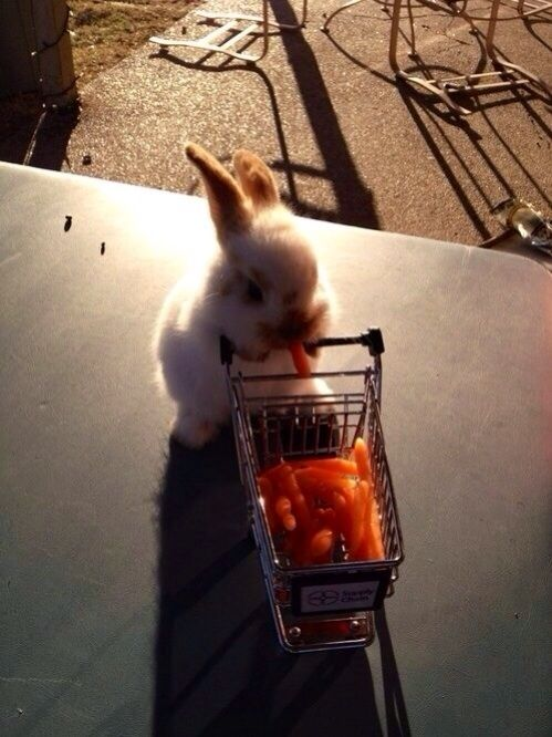 The day when the bunnies went to the grocery store. | The 30 Greatest Moments In The History Of Cute