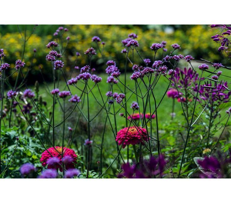 Pin Auf Blumen Garten