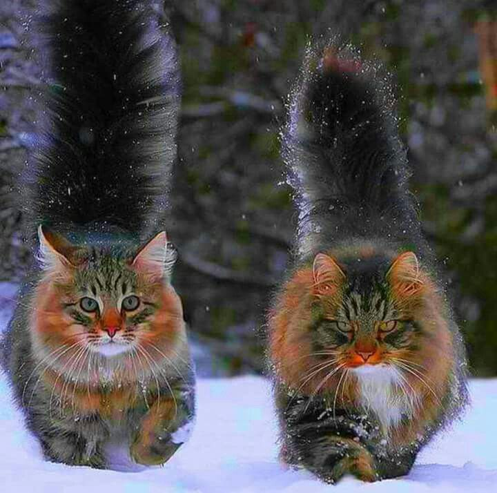 Is this the same cat RIGHT LEFT?