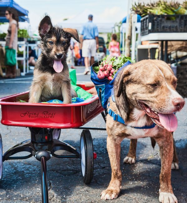 Image result for dog at farmers market