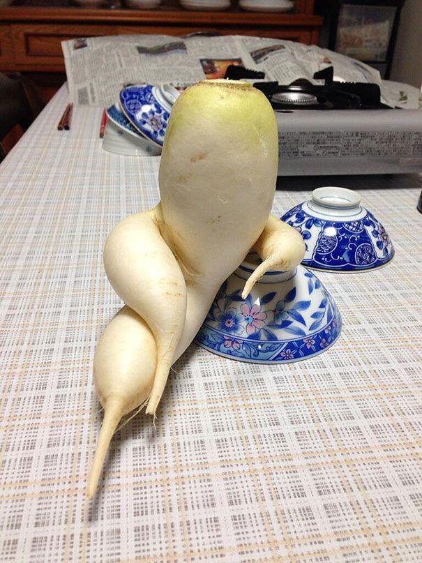 fruits et legumes aux formes insolites et marrantes radis 15 fruits et légumes aux formes insolites photo légume image fruit forme desig...