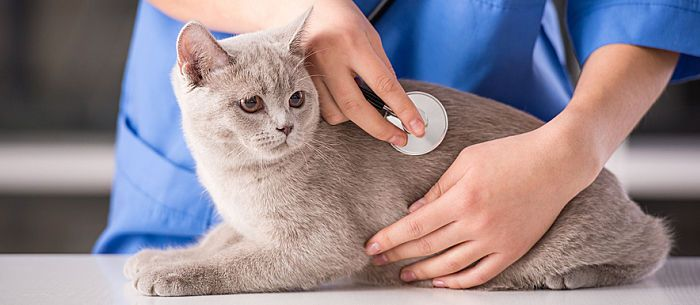 Signs and symptoms of feline distemper