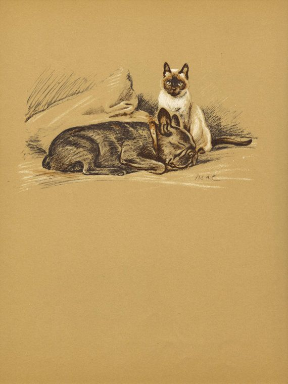 Cat Amp Dog 1930s Lucy Dawson Vintage Dog Book By