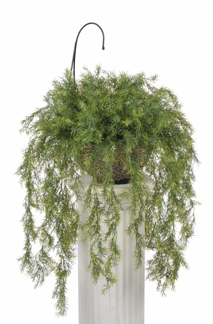 zimmerpflanzen wenig licht zierspargel zart blaetter saeule