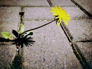 Is money making us sick? Blog post by J.P. Kallio