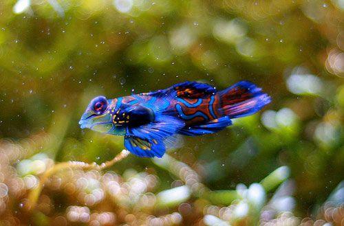 Amazing Freshwater Aquarium Fish 18 Amazing Freshwater Fish