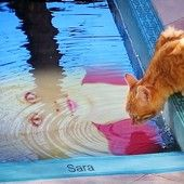Sara's Cat near the Pool.The photo shows Sara Adeline Mazzolini in the pool. Photo shared via Share.Pho.to: http://pho.to/8t7td