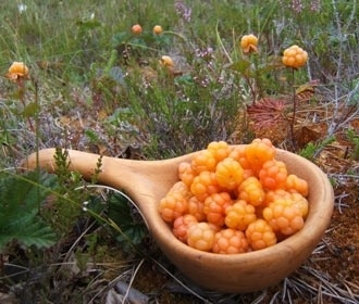 Hjortron (Cloudberry), by: Peter Rijs.   Cloudberry preserves available in the spring