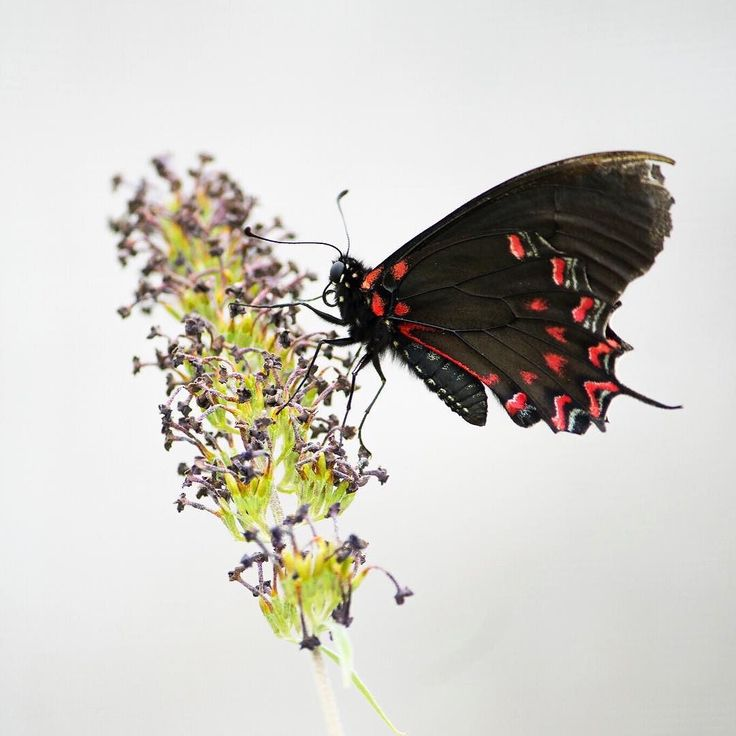 Check out the butterfly conservation website to find out how you can do your bit to help butterflies . . . . Visit the butterfly conservation website to find out how you can do your bit to help butterflies . . . . #butterflytuesdays #nature #butterfly #wildlife #outdoorliving #simplelife #getoutdoors #thegreatoutdoors #itsamazingoutthere #OptOutside #outdoorliving #ourplanetdaily #outsideculture #theartofslowliving #nothingisordinary #littlestoriesofmylife #livethelittlethings #thehappynow…