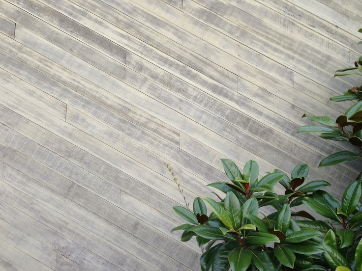 Wooden wall and plant