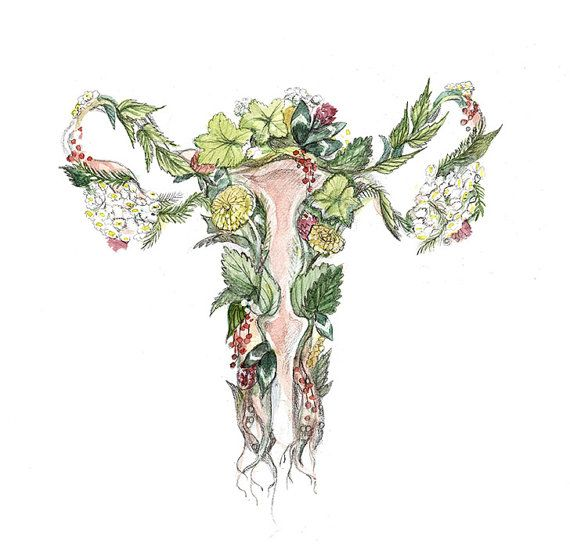 Digital print of a watercolor and pencil original drawing celebrate uterus, ovaries, vagina, vulva and menstrual period with medicinal plants