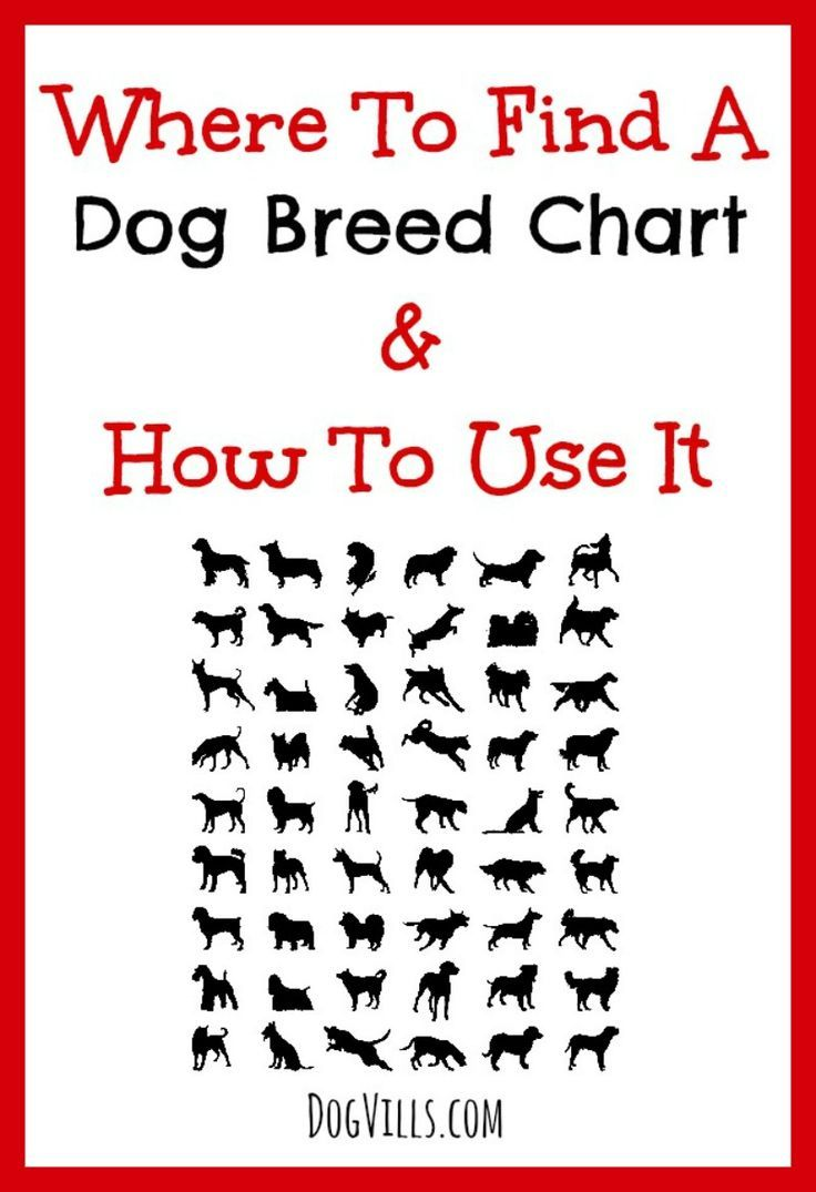 Check out our tips on where to find a dog breed chart and how to use it to choose the right dog for your family!