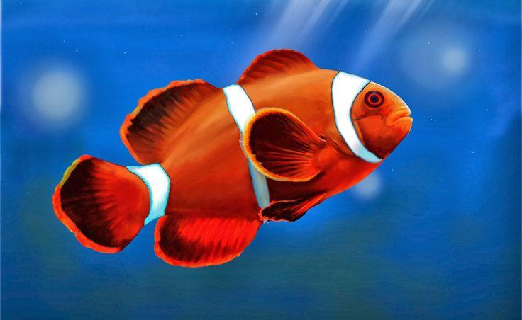 ikan-hias-12-a-clown-fish.jpg (1399×861)