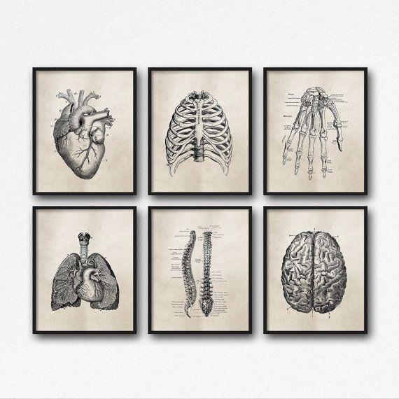 Ensemble de six reproductions artistiques – Art mural en anatomie scientifique, brun neutre, …