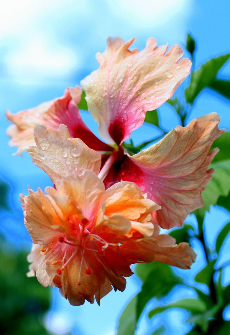 Flower in Hawaii