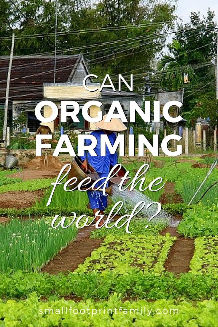Can organic farming feed the world, even when we have more than 8 billion people? According to leading experts, it's the only thing that can. Click to find out why!