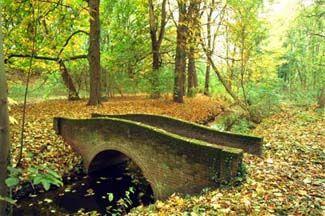 Sorghvliet Park, Den Haag: picknicken en bos hyacinten