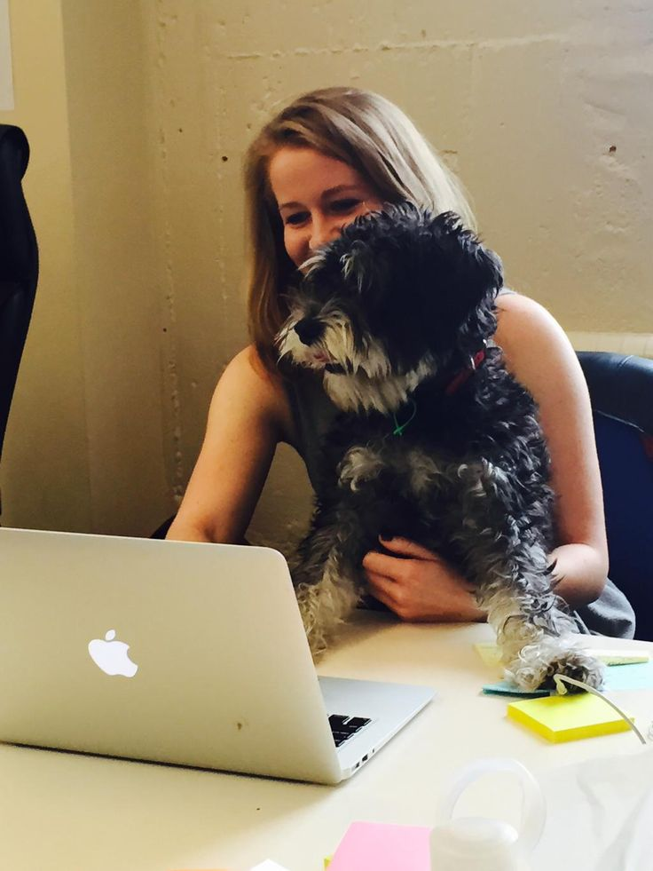 Eddie is in the @CollectApps office helping the #MarketingTeam  #DogsLife #CollectLife