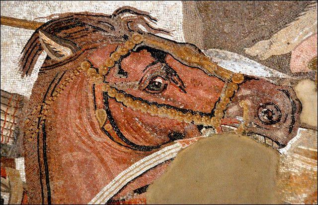 dal grande mosaico della battaglia di Isso (333 a. C.) fra Alessandro Magno e Dario III di Persia - particolare della testa del cavallo di Alessandro - dalla Casa del Fauno di Pompei - Museo Arch. Naz. Napoli