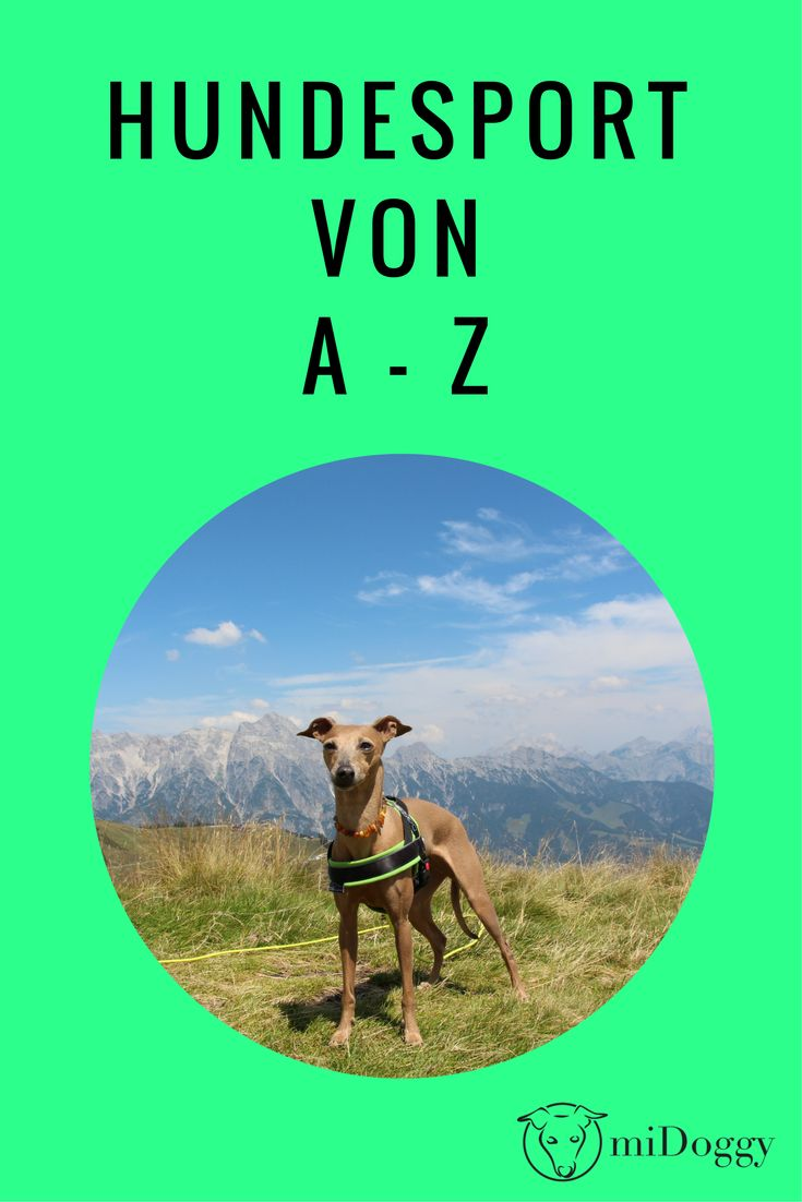 Hundesport von A bis Z