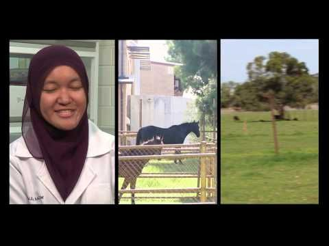 A student created video about Murdoch University Veterinary Science!
